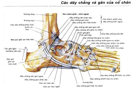 foot-massage-nguyen-son-137-Massage chân điều trị thoái hóa cổ chân kết hợp với cây thuốc quanh nhà